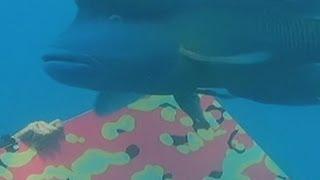 Australia's Great Barrier Reef gets underwater art gallery
