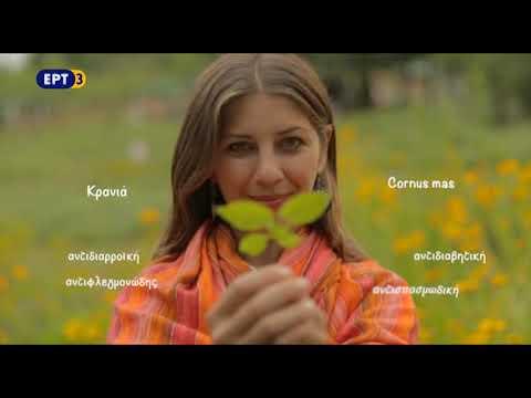 Βότανα, καρποί της γης – «Βαλκανικός Βοτανικός Κήπος Κρουσσίων» | 29/08/19 | ΕΡΤ