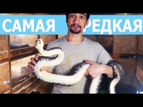 Самая редкая в мире змея