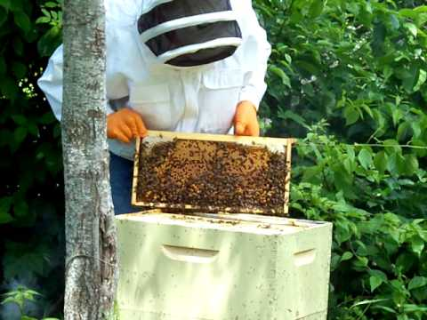 First time Checking out the honey bee hive, got it 5 weeks ago