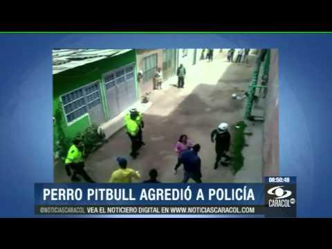 Mordida de pitbull generó pelea entre policías y dueños del perro - 18 de julio de 2013