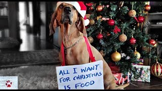 What dogs want (for Christmas) by The Orphan Pet