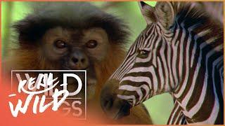 Video Wild Family Secrets   Full Series Live Stream   Wild Things MP3, 3GP, MP4, WEBM, AVI, FLV April 2018