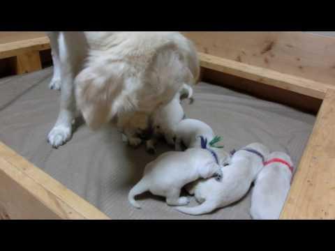 犬 動画   犬犬動画の詳細表示