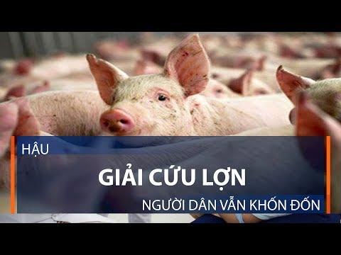 Hậu giải cứu lợn, người dân vẫn khốn đốn | VTC1 - Thời lượng: 3 phút, 29 giây.