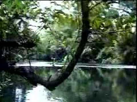 Amenazan contra la selva lacandona