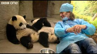 Video Martin Meets the Panda Cubs - Nature's Miracle Babies - Episode One - BBC One MP3, 3GP, MP4, WEBM, AVI, FLV Mei 2017
