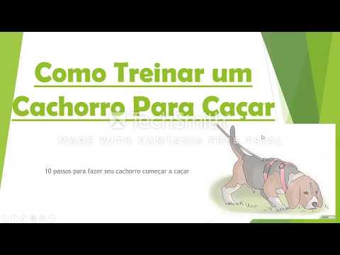Video Como Treinar um Cachorro a Caçar - 10 dicas ensinando o cão a caçar download in MP3, 3GP, MP4, WEBM, AVI, FLV January 2017