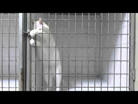 ذكاء قطة ،، لقطة طريفة للهروب من القفص .