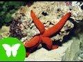 La Eduteca - Estrellas y erizos de mar (Equinodermos