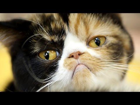 20 gatti che rimpiangono le loro decisioni! guardate come reagiscono!