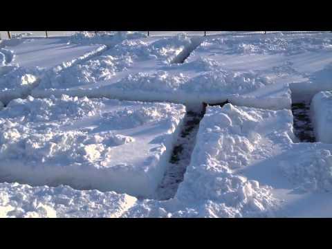 creano un labirinto con la neve, cane gioca come un pazzo.