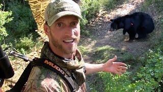 Video Black Bear Hunting / Best Black Bear Archery Shot Ever! MP3, 3GP, MP4, WEBM, AVI, FLV Juni 2017