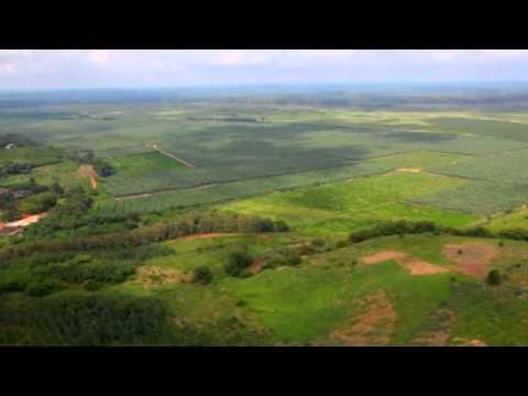 COTE D'IVOIRE: Le succès de ce pays repose sur l'Agriculture- Ministère de l'agriculture (Minagri)- 2014