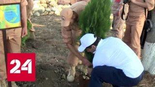 Олимпийцы посадили именные деревья на авиабазе Хмеймим