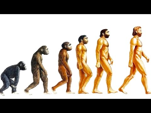 10 Unsolved Mysteries of Evolution.