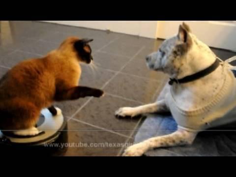 il gatto sul roomba