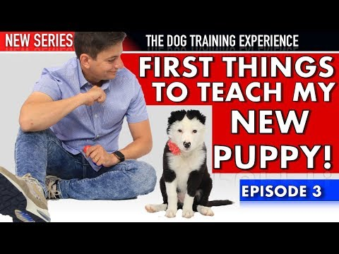 The First Things I'm Teaching My New Puppy! (NEW SERIES: Dog Training Experience Episode 3)