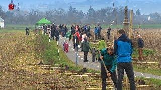 Výsadba stromů aneb dárek pro přírodu 2018
