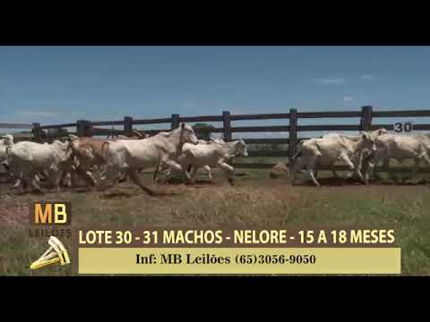 181º LEILÃO VIRTUAL MB LEILÕES