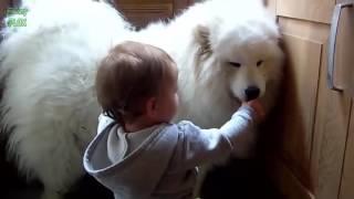 Clip hài hước nhất thế giới cười bể bụng về trẻ em và con vật cưng ♥‿♥, Trẻ con cười, trẻ em cười, hài trẻ em