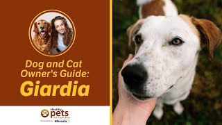 Dog And Cat Owner's Guide: Giardia