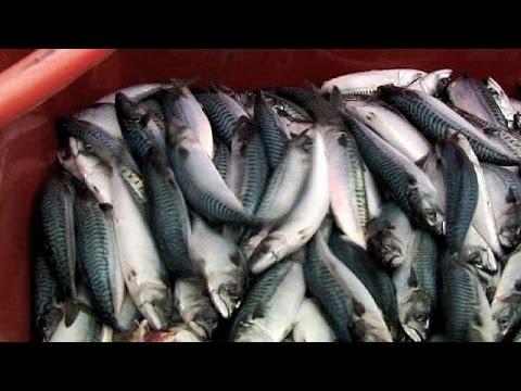 Βρυξέλλες: Ένα στα τρία ψάρια στα εστιατόρια δεν είναι αυτά που πληρώνουμε
