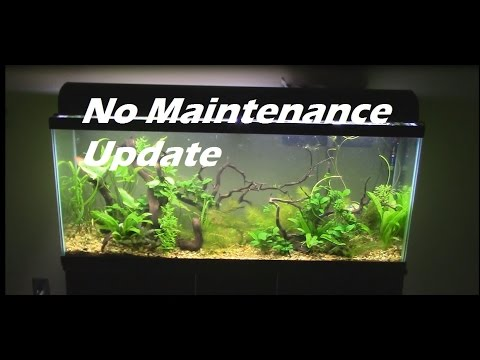 No Maintenance Tank 55 gallon Aquarium Setup Update