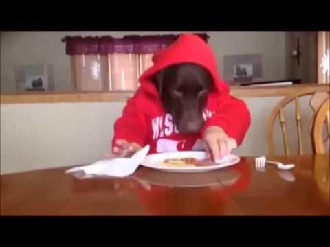 cane che mangia come un uomo!