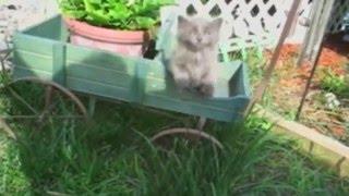 animale faze sarituri comice pisici
