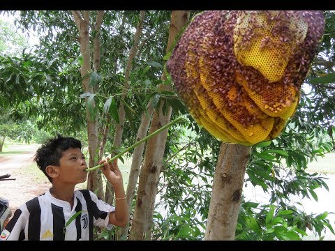 Wow! Smart Boy Show How To Get Honey Bee  In Cambodia - Traditional Bee Hunting In My Village