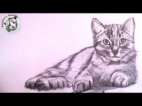 Dibujo Lapiz Gato Gato Realista a Lapiz Paso