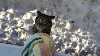 Кот домой пришел