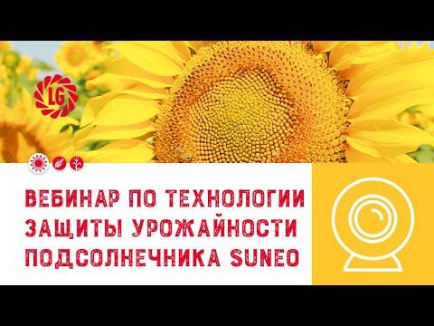 Вэбинар по технологии защиты урожайности подсолнечника SUNEO