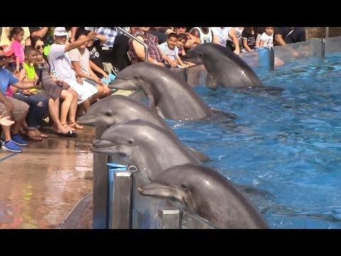 سباق الدلافين