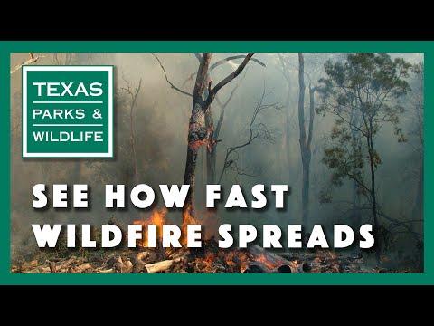 سرعة انتشار حرائق الغابات في تكساس