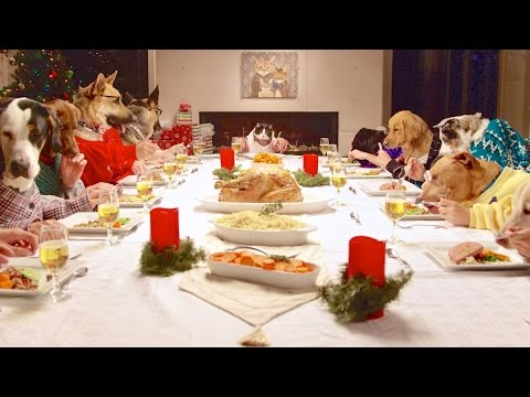 A Pet Friendly Christmas Feast