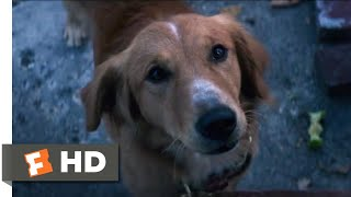 Nonton A Dog's Purpose (2017) - Coin Collecting Scene (2/10)   Movieclips Film Subtitle Indonesia Streaming Movie Download