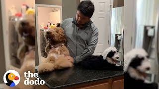 80-Pound Dog Thinks He's A Big Baby | The Dodo by The Dodo
