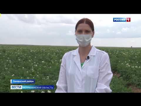 Россельхознадзор проверяет посевы картофеля в Астраханской области