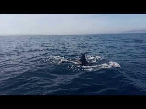 Касатки атаковали яхту перед входом в Гибралтар