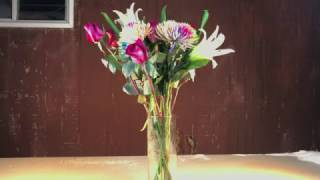 The weather got extremely cold (-16 F). A video was created to see what would happen to flowers in the extreme cold weather. Some of the plants were frozen almost instantaneously. The roses held up better than any other flower in the bunch.