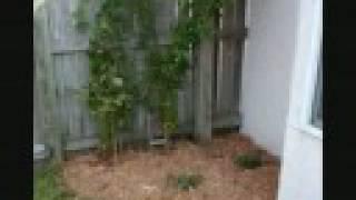 Passion Vine - Florida Gardening.