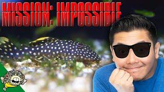 Is it Dead? Mission Impossible missing boxes unboxing! by Aquarium Co-Op