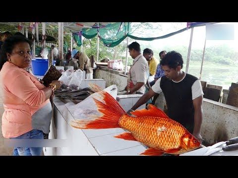 Amazing live Fish  cutting technique | تقنية مذهلة للاسماك | STREET FOODOS