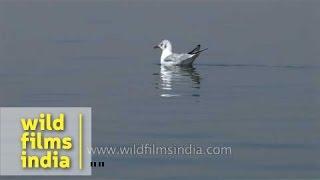 Boating across Nalsarovar Bird Sanctuary - Gujarat full download video download mp3 download music download