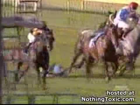 「[競馬]カモメの大群に突っ込んだ競走馬たち」のイメージ