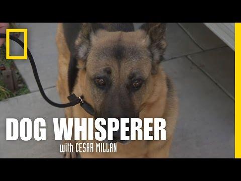 dog whisperer: cattivo cane o addestratore cattivo?