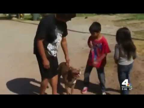 kids - http://www.rawstory.com/rs/2014/04/17/calif-tv-station-films-dog-calmly-playing-with-kids-after-cop-shoots-himself-trying-to-kill-it A California deputy acci...