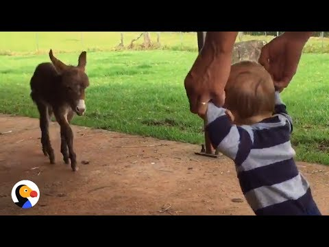 lasinello-che-incontra-un-bambino